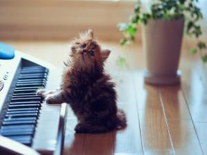 Gatito junto a un piano