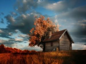 Árbol en otoño junto a una casa de campo