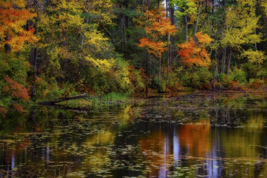 Lago junto a un bosque en otoño