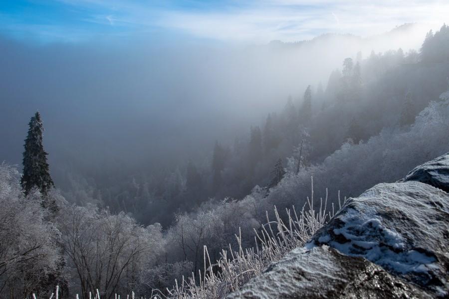 Niebla en invierno