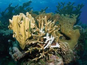 Corales bajo el mar