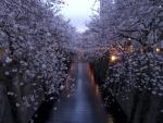 Cerezos en flor sobre un canal de agua en Japón