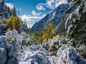 Árboles con nieve en las montañas