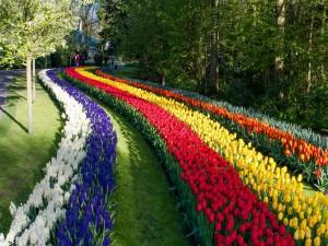 Parque con jacintos y tulipanes