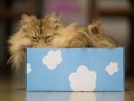 Gato adormilado dentro de una caja