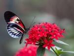 Una mariposa posada sobre una hermosa flor