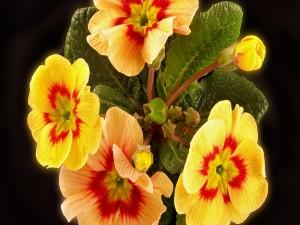 Bellas flores amarillas con un toque rojo