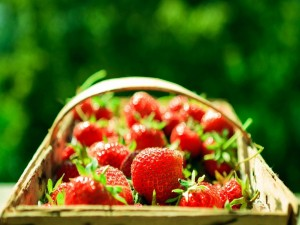 Fresas silvestres en una cesta