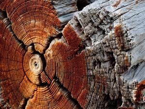Tronco de madera seco