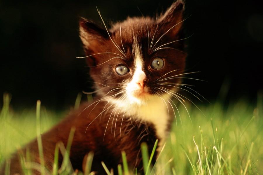Gatito mirando fijamente