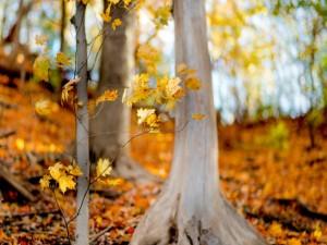 Hojas amarillas en un bosque otoñal