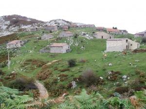 Vacas entre las cabañas (Picos de Europa)