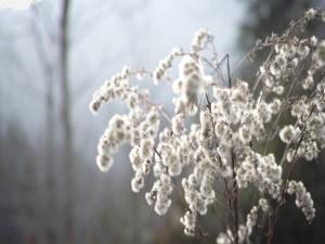 Una planta