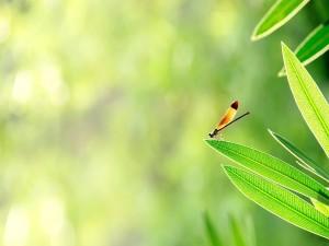 Pequeña libélula sobre una hoja