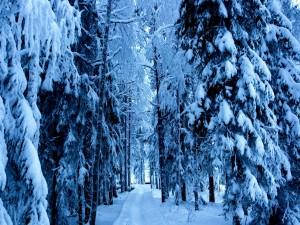 Nieve en el interior de un bosque