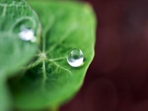 Una perfecta gota de agua sobre una hoja verde