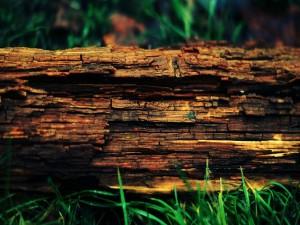 Tronco caído sobre la hierba