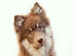 La cara de un lindo cachorro