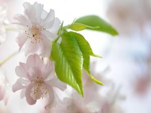 Hojas verdes junto a unas flores blancas