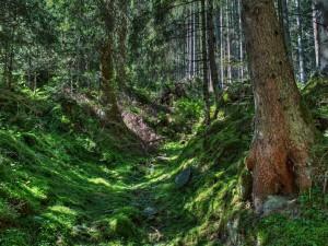 Hierba en el interior de un bosque