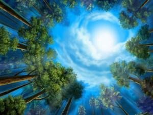 Luna iluminando el bosque