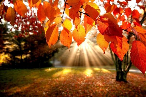 Sol iluminando las hojas otoñales
