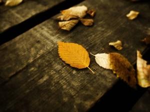 Hojas otoñales sobre una madera