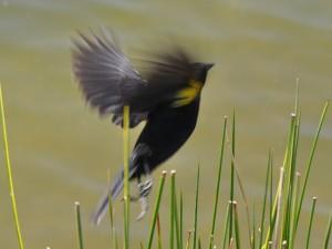 Pájaro batiendo sus alas