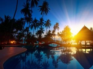 Palmeras reflejadas en una piscina al amanecer