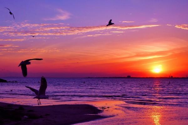 Gaviotas en una playa al amanecer