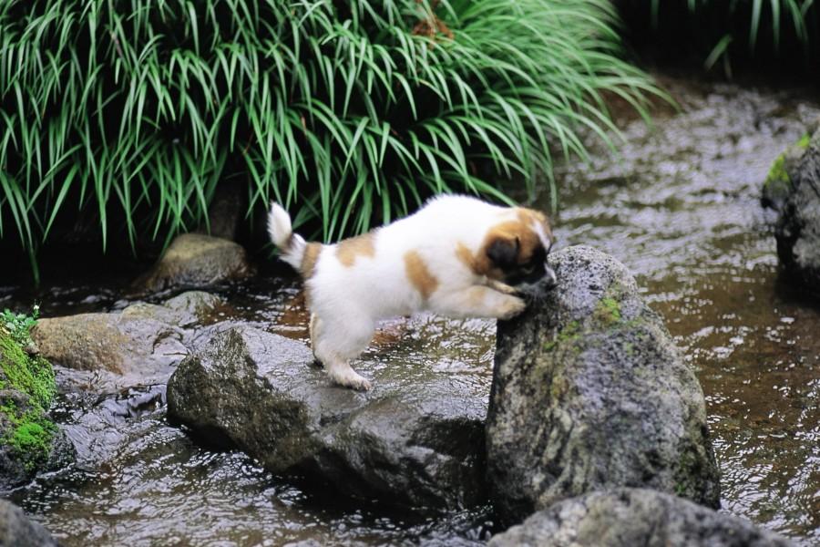 Perro tratando de cruzar el río