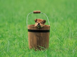 Perrito dentro de una tina