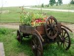 Flores plantadas en un carro