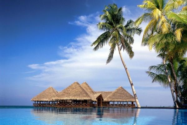 Grandes palmeras junto al mar