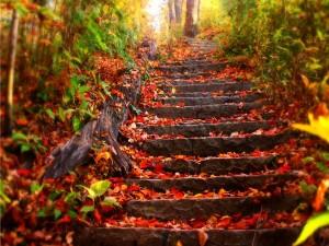 Escaleras en un bosque otoñal
