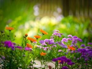 Flores primaverales en un jardín