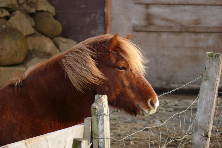 Un hermoso poni