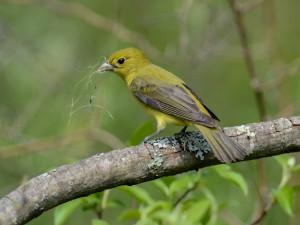 Pájaro con unas hierbas en el pico
