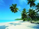Palmeras proyectando su sombra sobre la playa