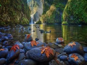 Hojas de otoño acostadas sobre las piedras de un hermoso río