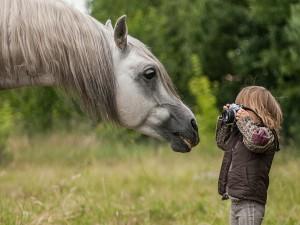 Pequeño niño tomando una foto al caballo