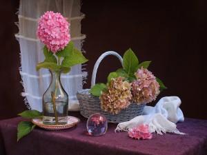 Bodegón con hortensias rosas