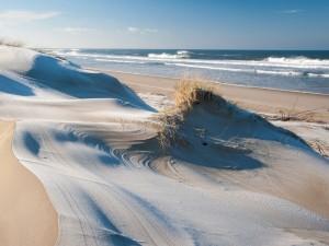 Dunas en una playa