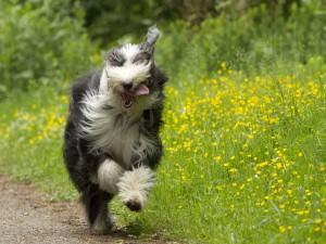 Un bonito perro corriendo junto a las flores