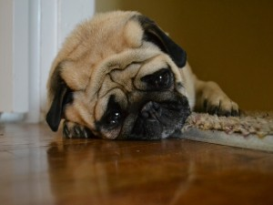 Perrito con cara de tristeza
