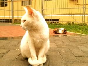 Dos bonitos gatos callejeros