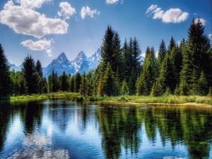 Pinos a orillas de un lago