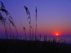 Sol anaranjado al amanecer