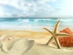 Bonita estrella de mar sobre la arena de una playa