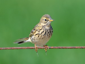 Pájaro con largas uñas